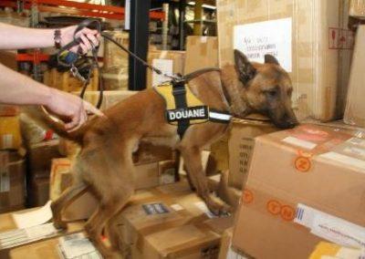 douanes - Honden light